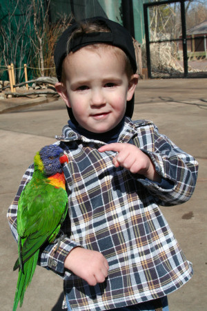 Owen holding a Lorikeet